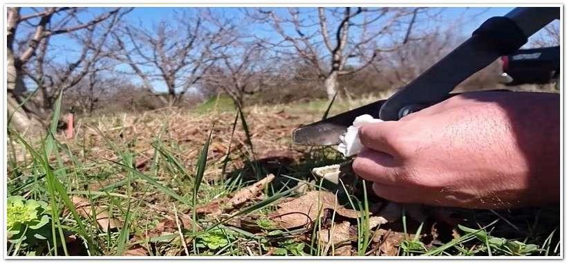 Инструмент для обрезки садовых деревьев