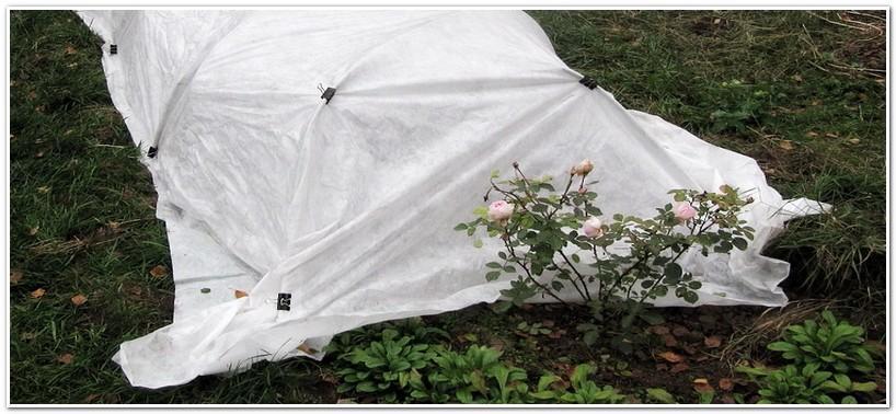 Полиэтиленовая пленка для укрывания растений