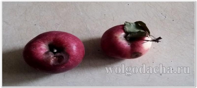 Поврежденные яблоки