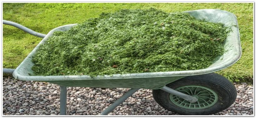 Трава для приготовления удобрения