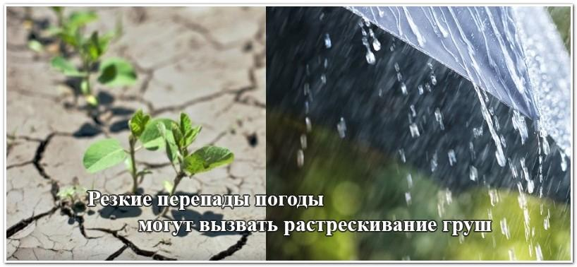 Засуха и дождь