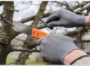 Что делать, если деревья и кустарники в саду подмерзли