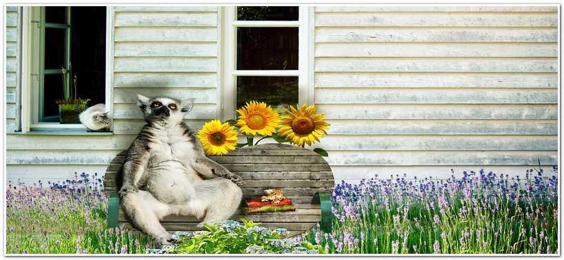На лавочке у садового домика